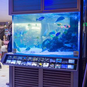 国際通りのドン・キホーテの魚の説明板がひとつだけすごい