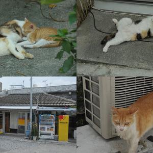 まちぐゎー猫探訪問 vol.2 てんぷらの美味しい店の看板猫を激写しに壺屋へGO!