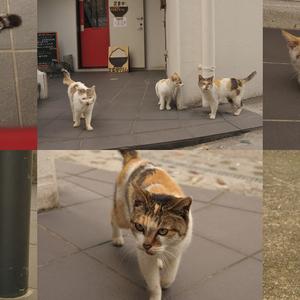 まちぐゎー猫探訪問 vol.3 沖縄の猫の尻尾は短く折れ曲がる?