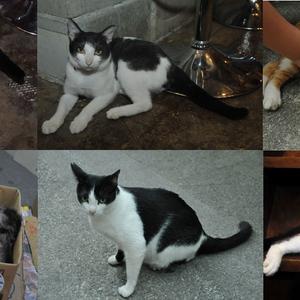 まちぐゎー猫探訪問vol.4 空から降ってきた猫に会いに行く旅