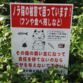 ノラ猫の顔が憎たらしい