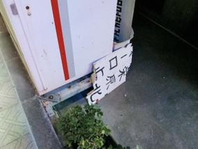 maehara2_07.jpg