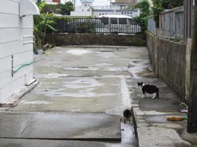 shinmachi13.jpg