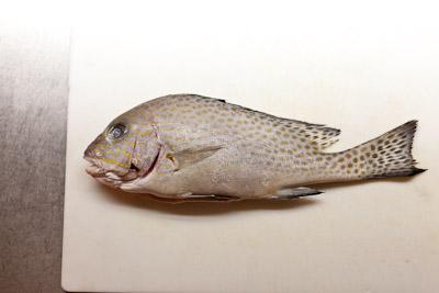 grilledfish_02.jpg