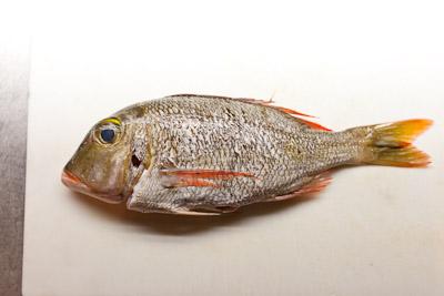 grilledfish_04.jpg
