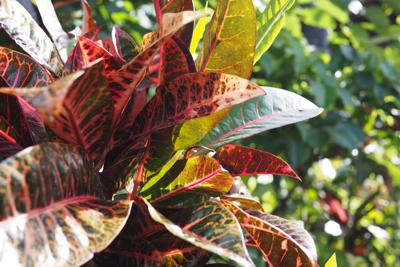 botanical24.jpg