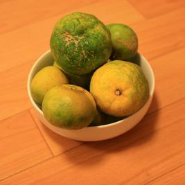 沖縄で柑橘類づくし