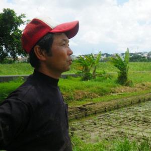 大山の田芋(ターンム)畑