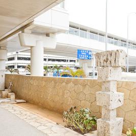 那覇空港の猫が気になる