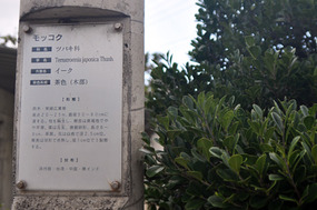 kasuri_09.jpg
