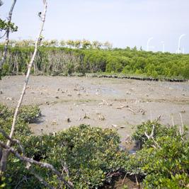 漫湖にある漫湖水鳥 湿地センターに行ってきた