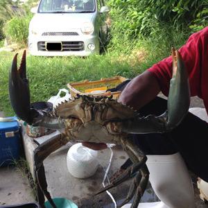 【お仕事密着】沖縄のカニ漁師
