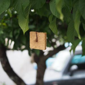 「あの板」には今も続く沖縄と害虫との戦いの歴史があった