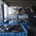 【大人の社会見学】沖縄本島唯一の鰹節工場(前編)