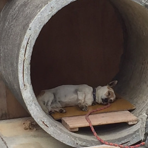 沖縄こどもの国でいちばんやる気がある動物を調査してみた