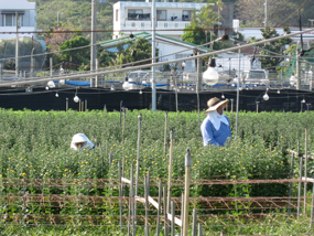 shiritori11.jpg